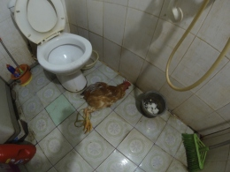 At the lunch spot in Lao Cai: do you have to pee, or are you chicken?