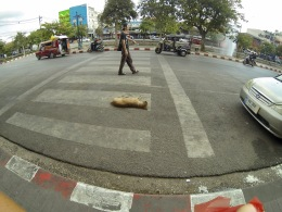 Another Thai dog picking an amazing place for a nap. We noticed, in our journeys, many three-legged Thai dogs...