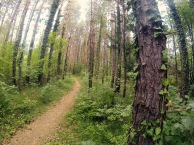A walk in the woods, anyone?
