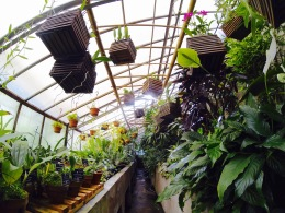 Orchids, jungle plants and more in the greenhouse...
