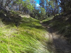 Lush grasses near the end of the trail.