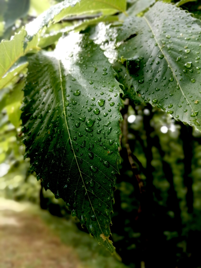 leaves with water droplets