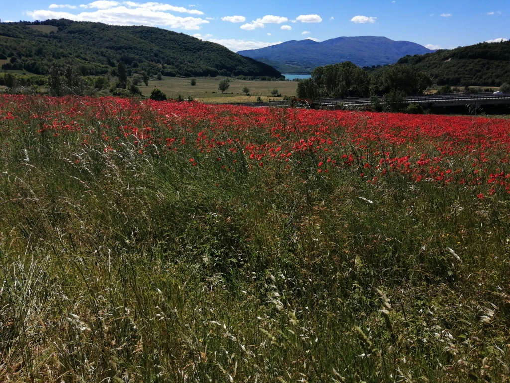 A bright red poppy-filled field in front of mountains and a lake in the distance.